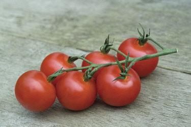 Tomato, Lycopersicon esculentum.