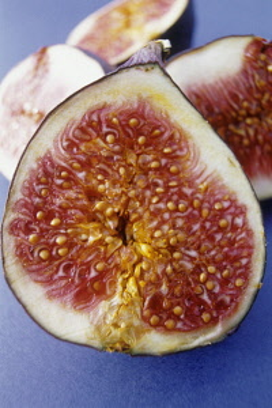 Fig, Ficus carcia.