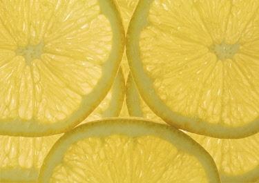 Lemon, Citrus limon.