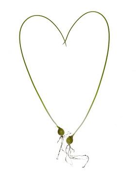 Bulbs in a heart shape.