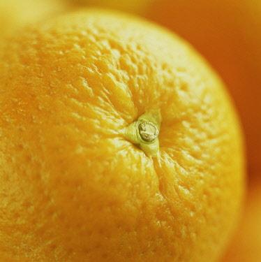 Orange, Citrus sinensis.