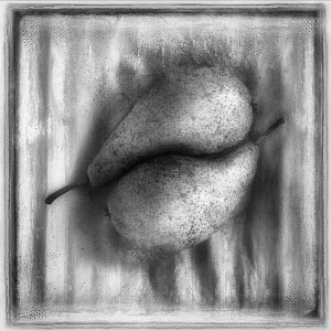Pear, Pyrus communis cultivar. Digitally manipulated, black and white image of two pears placed together within frame on textured background, softened to create effect of illustration.