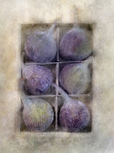 Fig, Ficus carica. Digitally manipulated image of box of six figs against softened, muted background creating effect of illustration.