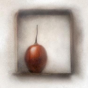 Tamarillo, Solanum betaceum. Digitally manipulated image of Tamarillo within frame against softened, muted background creating effect of illustration.