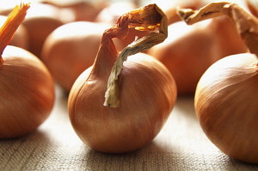 Onion, Allium cepa, Studio shot of several onions.