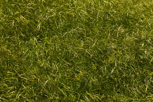 Grass, Detail of a grassy area.