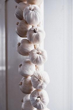Garlic, Allium Sativum, A braid of hanging garlic bulbs in a kitchen.