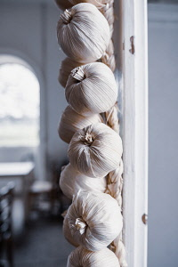Garlic, Allium Sativum, A braid of hanging garlic bulbs in a kitchen.