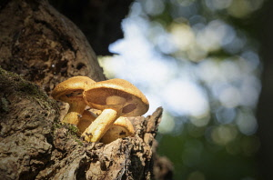 Fungi growing on trees in the ancient Wytham woodland, Oxford