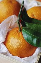 Clementine, Citrus reticulata 'Clementine'.
