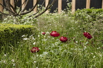 Chelsea Flower Show 2013, Daily Telegraph garden, Designer Christopher Bradley Hole
