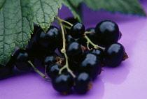 Currant, Blackcurrant, Ribes nigrum.