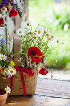 Daisy, Argyranthemum frutescens.