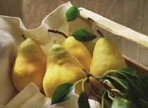 Pear, Pyrus communis.