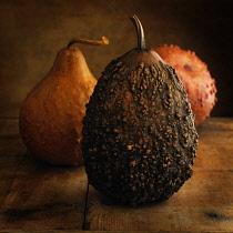 Gourd, Cucurbita pepo.