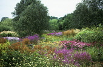 Pensthorpe gardens.