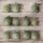 Greengage, Prunus domestica ssp. italica var. claudiana.  Digitally manipulated image of greengages on three shelves against muted, softened background to create effect of illustration.