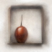 Tamarillo, Solanum betaceum. Digitally manipulated image of Tamarillo within frame against softened, muted background creating effect of illustration.