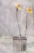 Daffodil, Narcissus cultivar. Digitally manipulated image of two flowers in vase against softened, muted background creating effect of illustration.