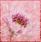 Pink flower abstract representation.