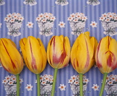 Tulips in a row against a printed pattern background.