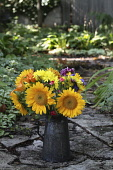 Sunflower, Helianthus annuus, bouquet of flowers in an antique metal can in the garden.