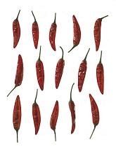 Chilli Pepper, Capsicum annuum.