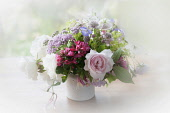 Rose, Escallonia. Yarrow and Astrantia, bunch of cottage garden flowers in a white jug with a dreamy white vignette.