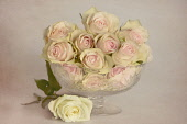Rode, Rosa, glass bowl of pink flowers with a white rose laid beneath, on a textured painterly mottled background, giving a romantic atmosphere.
