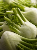 Fennel bulb, Florence fennel, Foeniculum vulgare, close up of harvested and trimmed vegetable.