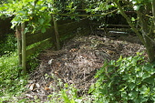 A compost heap made with wooden planks and posts in a wild area with nettles growing nearby.