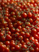 Tomato, Lycopersicon esculentum 'Gardeners Delight', Top view of a mass of small red tomatoes, some on stems.