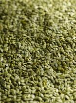 Pumpkin seeds, Cucurbita pepo, Mass of green seeds.