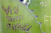 Agave, Giant agave, Agave salmiana, Close view of grafitti scratched into the fleshy leaf.