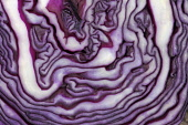 Red cabbage, Brassica oleracea capitata, Very close abstract view of slice through cabbage forming purple and white pattern.
