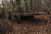 Hornbeam, Carpinus betulus. Woodland in winter with carpet of brown leaves and a decaying old cart with green moss covered wheels being reclaimed by nature.