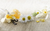Chamomile, Chamaemelum nobileon with Vanilla flowers and pods, vanilla planifolia, and honey, arranged on pale, distressed, wooden background. Selective focus.