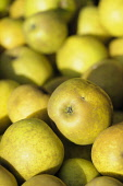 Apple, Malus domestica  'Lemon pippin', Close up of harvested fruit.-