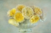 Rose 'Charlotte', Rosa 'Charlotte', Studio shot of arrangement of yellow flowers in a bowl vase.-