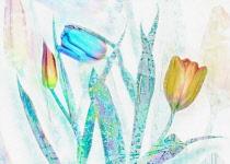 Tulip, Tulipa, Tulips as a colourful artistic representation.