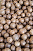 Macadamia nut, Macadamia integrifolia, Aerial view of mass of brown coloured nuts,