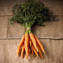 Carrot, Daucus carota, Studio shot of bunch of orange coloured carrots with green tops.