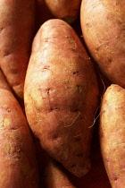 Potato, Solanum tuberosum, Brown subject.