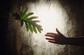 Abstract of hand reaching for foliage.