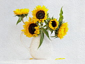 Sunflower, Helianthus annuus in jug vase, Artistic textured layers added to image to produce a painterly effect.