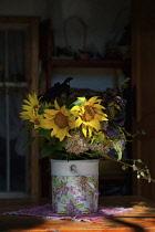 Sunflower, Helianthus, Yellow cut flowers in bucket on patio.