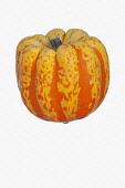 Squash, Carnival squash, Cucurbita pepo 'Carnival', Studio shot of single orange coloured fruit against white background.