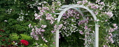 Arch with climbing roses, Heirloom Gardens, St Paul, Oregon, USA.