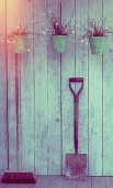A broom, a spade and three hanging pots of daisies hanging from a gardeners shed.