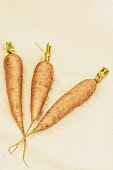 Carrot, Daucus Carota, Three carrots in a village produce show.